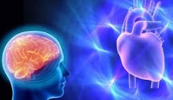 ذهن یا قلب: کدام یک در قضاوت خِردمندانه نقش دارد؟
